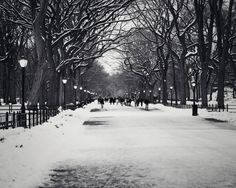 Black & White Park during winter    Size; 1280 x 1024 Source; Google Images