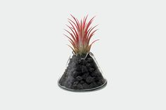 """이웃탐험"" by YEOP (2015)  Tillandsia(Air Plant)"