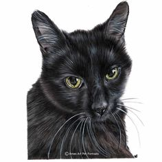 Cat pet portrait of Belle the black cat. From the USA. Faber Castell and Luminance Colour Pencils. Bristol Board extra smooth A4 paper. pencil art, pencil drawings, colour pencil drawings, pencil portraits, art drawings.