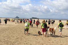 110 chiens et leurs maîtres en balade dans la baie du Mont Saint-Michel, dimanche 17 juin.