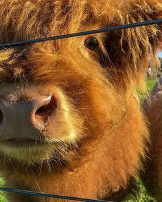 Meet Ginger from the Farm At Byron Bay (@thefarmatbyronbay) on Instagram