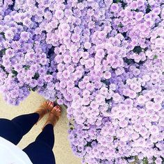 This bunch of purple flowers is gorgeous! It is like a purple cloud of flowers, we love this shot! No Rain No Flowers, May Flowers, Little Flowers, Purple Flowers, Beautiful Flowers, Pastel Purple, Plants Are Friends, Bloom Where You Are Planted, Flower Wallpaper