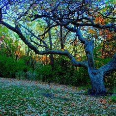 Gnarly tree - @frankyboy1- #webstagram