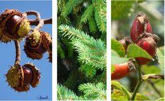 zioła zapewniają ochronę przed przeziębieniem i grypą program antywirusowy