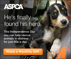 Thank You For Clicking @ The Animal Rescue Site