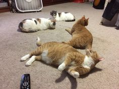 I sure do love my kitties and after I get off of work they gather like a town hall meeting. http://ift.tt/2sfeiA1