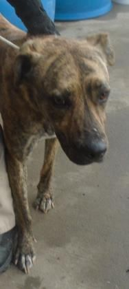 40356083 Located In El Paso Tx Has 2 Days Left To Live Adopt Him