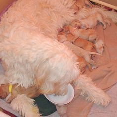 Mother With Her Puppies