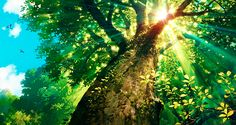 ✮ ANIME ART ✮ nature. . .tree. . .forest. . .leaves. . .sky. . .sunlight. . .sun beams. . .pretty. . .amazing detail. . .anime scenery