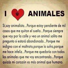 Animalistas porfavor !