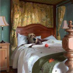 Room Service by Stephen Hanson