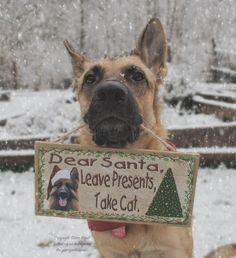Wicked Training Your German Shepherd Dog Ideas. Mind Blowing Training Your German Shepherd Dog Ideas. Positive Dog Training, Training Your Dog, Animals And Pets, Funny Animals, Cute Animals, Funny Dogs, Cute Dogs, Family Christmas Cards, Christmas Humor