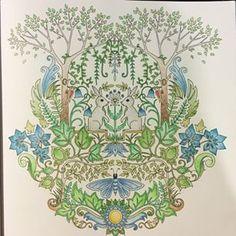 Instagram photo by raphitax - Terminé ! Aux Faber Castell polychromos #enchantedforest #johannabasford #foretenchantee #forêtenchantée #coloriage #draw #drawing #livre #book #rabbit #lapin #bird #ouseau #leaves #feuilles #flower #fleur #degradés #flore #gradient #antistress #arttherapie #adulte #fabercastell #polychromos #pencil #crayons #couleur