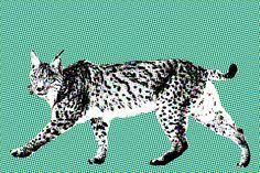 Indianen zien de lynx als de kenner van de vergeten geheimen. Mensen met lynxkracht, hebben een soort helderziendheid. Door innerlijke schouwing zien zij het ware zelf in anderen en ook hun eigen identiteit. Lynx, Giraffe, Animals, Giraffes, Animales, Animaux, Animal Memes, Eurasian Lynx, Animal