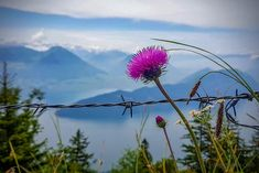 View of Lake Lucerne during our hike on the Rigi – the Queen of Mountains, in Central Switzerland. Lucerne, Switzerland, Climbing, Hiking, Mountains, Plants, Travel, Queen, Europe