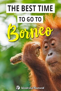 The best time to go to Borneo, Malaysia - Destination Asia Borneo Travel, Malaysia Travel, Asia Travel, Travel Plane, Croatia Travel, Hawaii Travel, Italy Travel, Backpacking South America, Backpacking Europe