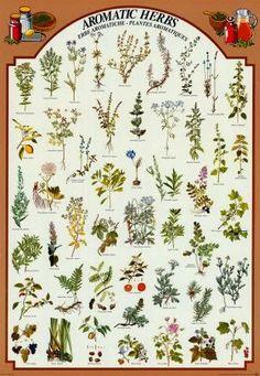 Si tienes alergia éste post te interesa #alergia #remediosnaturales #naturopatia #herbology  http://www.mbfestudio.com/2014/05/mariposas-responden-7-remedios-caseros.html