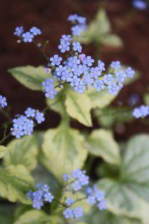 tiny purple flowerz