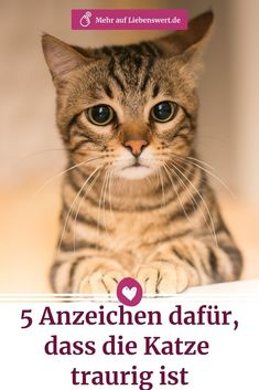 5 signs that the cat is Anzeichen dafür, dass die Katze traurig ist It is not always easy to tell whether the cat is sad or just tired. These five signs can give you crucial clues. Anime Cat, Anime Manga, Pet Dogs, Dog Cat, Pets, Gatos Cats, Dog Safety, Anime Princess, Cat Tattoo