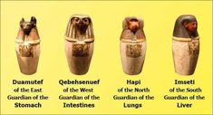 The Mummy - Egyptian Canopic Jars Decor - Keep beneficial health and beauty ingredients in them. Sons Of Horus, Canopic Jars, Egyptian Mummies, Egypt Travel, Ancient Egyptian Art, Decorated Jars, Fun At Work, Ancient Civilizations, British Museum