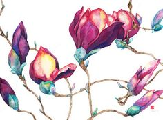 Magnolia Buds 2008 - Sarah Steele ( artist )