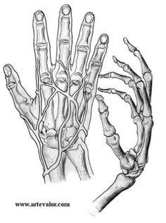 ¿Cómo dibujar manos? —Anatomía y proporciones, primera parte | Arte Valor