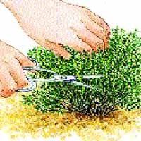 La récolte et la conservation du thym - Green Garden, Herb Garden, Vegetable Garden, Garden Art, Different Vegetables, Root Vegetables, Potager Bio, Garden Online, Terrarium Plants