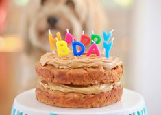 Dog Birthday Cake Recipe For Your Furry Friend - Bigger Bolder Baking