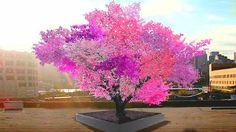 40種類ものフルーツが実る木「Tree of 40 Fruit」 - GIGAZINE
