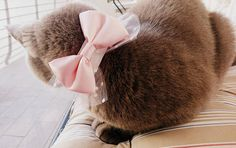 Cat Bow Tie Dog Bow Tie Girl Dog Collar Pink and White Bow