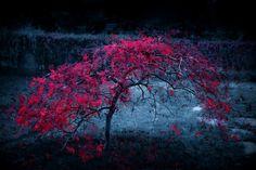 свет, осень, листья, дерево, туман, багрянец картинки на рабочий стол 85615