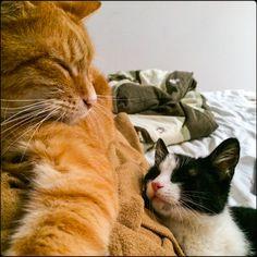 #love #cat #poznan