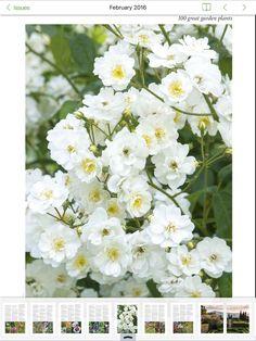 Cherry Blooms, Spring Awakening, Garden, Plants, Color, Garten, Lawn And Garden, Colour, Gardens