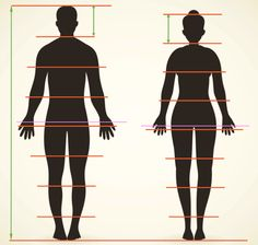 Male and Female Figure Proportions