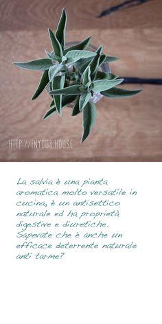 #Rimedi #naturali contro le #tarme. #Salvia #casa #cucina