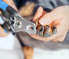 Surprisingly, the best way to hold a cat was not part of Dr. Patty Khuly's veterinary curriculum. Here she shares some of the things she had to learn on the job.