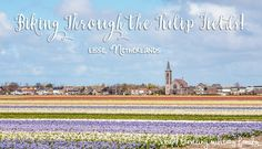 I've always thought biking through the tulip fields would be a fun, so this year a group of ladies went to to Lisse, Netherlands to do that as a day trip! Tulip Fields, Bike Path, Amsterdam Travel, Once In A Lifetime, Travel Information, Cheap Travel, Plan Your Trip, Day Trip, Biking
