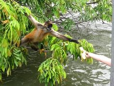Monkey Island in Nicaragua! I loved this place!! :)