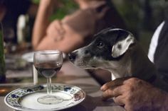 He'll Prove His Dog Can Talk For A Free Drink. A story about a talking dog with a quirky ending that's sure to make you groan. Food Dog, Dog Food Recipes, Tick Removal, Dog Couch, Pet Food Storage, Man And Dog, Friday Humor, Flea And Tick, Dog Houses