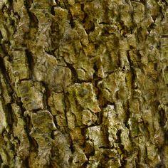 texturas naturais - Pesquisa Google