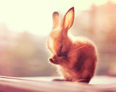 Tiny bunnies in these adorable photos via hellogiggles.com