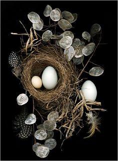 Nesting, Still Life, Scanner Photography, By Ellen Hoverkamp - Scanner… Still Life Photography, Art Photography, School Photography, Culture Art, Still Life Photos, Ikebana, Bird Feathers, Be Still, Artsy