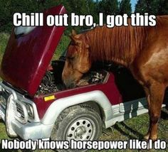 30 Funny animal captions - part funny animal memes, funny animals, funny memes, animal pictures Funny Horse Memes, Funny Horse Pictures, Funny Horses, Cute Horses, Funny Animal Memes, Horse Love, Animal Quotes, Cute Funny Animals, Beautiful Horses
