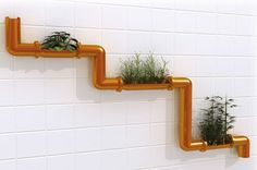 plants grown in copper pipes attached to wall.  How cool is that?