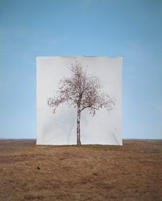 이명호 Tree #1 (2006)