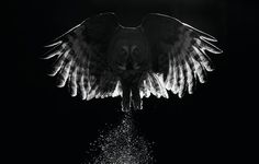 Twilight by Markus Varesvuo, Kuusamo, Finland: Best portfolio winner in creative imagery category