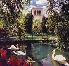 Visit The Hotel Bel Air. It's located at 701 Stone Canyon Rd. Bel Air, CA. Places To Travel, Travel Destinations, Places To Visit, Beautiful Hotels, Beautiful Places, Simply Beautiful, Bel Air Los Angeles, Travel Around The World, Around The Worlds
