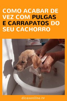 Você sabia que sal mata pulga e carrapato? Floki, Dog Care, Pet Shop, Shih Tzu, Dog Treats, Animals And Pets, Pugs, Pet Dogs, Pitbulls