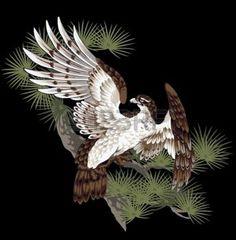pine and hawk photo
