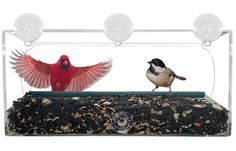 Amazon.com : Grateful Gnome - Long Window Bird Feeder - Clear Acrylic House for Small or Large Wild Bird Like Finch and Cardinal - Best Unique and Unusual Window Bird Feeder Out There - Cool (Virtually Squirrel Proof) Platform Tray Station for Backyard Window. Lifetime Guaranteed. : Patio, Lawn & Garden